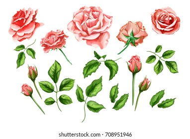 Flowers. vector realistic hand drawn rose flower bouquet. Blossoms open and closed, leaves and branch. illustration on a black background. Spring, summer wedding or marriage symbol.