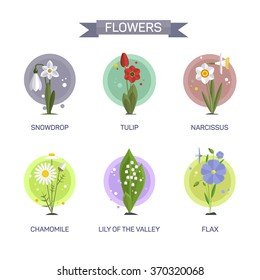 Flowers vector set isolated on white background. Illustration in flat style design. Icons and emblems. Tulip, camomile, snowdrop, lily, narcissus, flax.