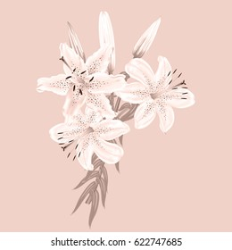 Flowers of white lilies on a pink background