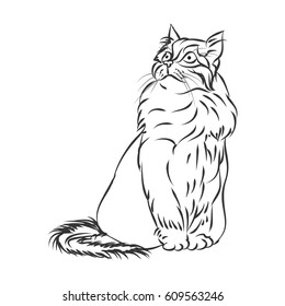 Fluffy cat outline on white background, vector