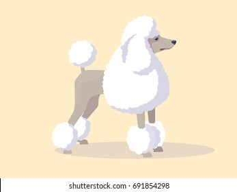 Fluffy french poodle. Vector clip art