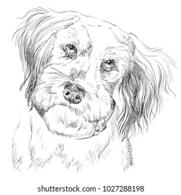 Fluffy Mongrel Dog Vector Hand Drawing Illustration In Black Color Isolated  On White Background