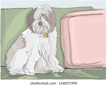 Fluffy sheepdog with full fur, sitting on a sofa and looking at the camera. Dog is a purebred Polish Lowland Sheepdog but also looks like an Old English Sheepdog puppy. Hand drawn vector illustration.