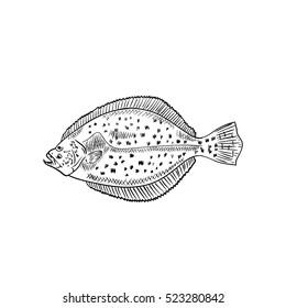 Fluke fish