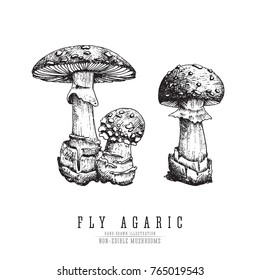 Fly agaric, non-edible poisonous forest mushrooms sketch vector illustration isolated.