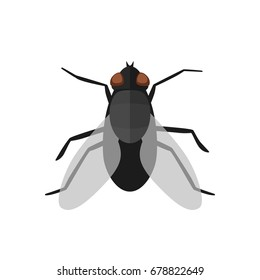 Fly icon in flat style. Vector simple illustration of housefly on white background.