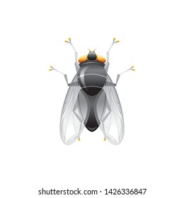 Fly insect icon. Live house fly. 3d realistic insect. Vector illustration isolated on white background. Housefly animal symbol. Macro style for logo design, education banner.