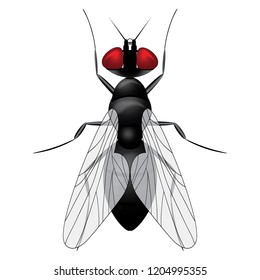 Fly insect sketch symbol illustration. Housefly vector icon design.