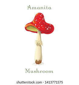 fly mushroom Amanita muscaria isolated on white background. red spotted poisonous mushroom. Forest poisonous red mushroom. Fly agaric in cartoon style. Vector illustration of fly mushroom isolated