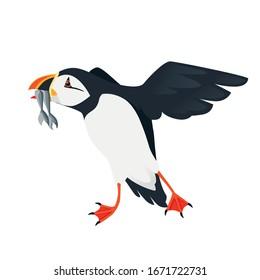 Flying atlantic puffin bird with fish in beak cartoon animal design flat vector illustration isolated on white background