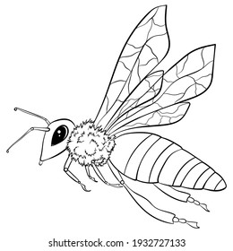 Flying bee with wings and striped body in line art style. Hand drawn vector illustration isolated on white background. Drawing for coloring book. Print, logo design