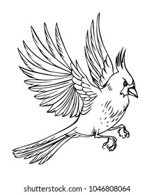Flying bird cardinal, black and white vector illustration on white background.
