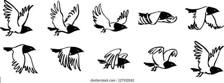 Flying bird sequence