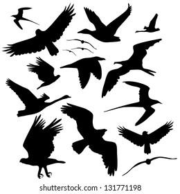 Flying Bird Silhouette Collection. EPS 8 vector, grouped for easy editing. No open shapes or paths.