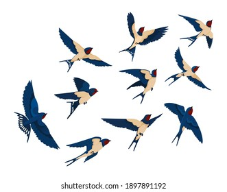 Flying bird various view collection set. Flock of swallows isolated on white background. Vector illustration for nature, wildlife, animal, ornithology concept