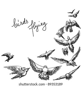 Flying birds background; pencil drawing vector illustration