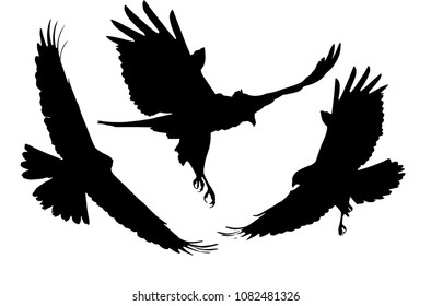 Flying birds. Bird of prey. Vector images. White background.