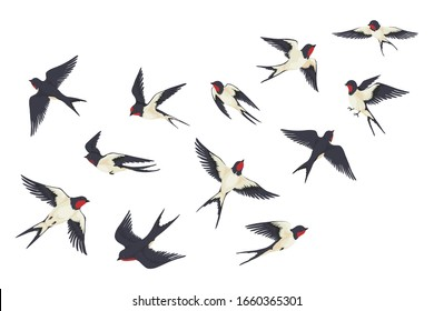 Flying birds flock. Cartoon hand drawn swallows in fight with different poses, kids illustration isolated on white. Vector set colourful image freedom swallow group