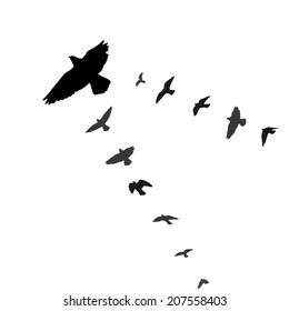 Flying birds on white background. Vector