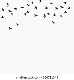 Flying birds silhouettes background