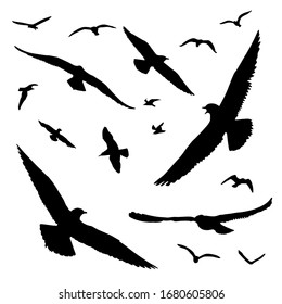Flying birds silhouettes. Black-headed gull, Chroicocephalus ridibundus, a specie living in Europe and North America close to lakes, marshes, ponds, dumps. Vector illustration