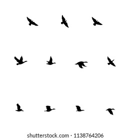 Flying Birds Silhouettes of flying birds - ducks and geese.