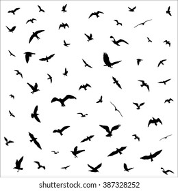 Flying birds silhouettes on white background. Vector illustration