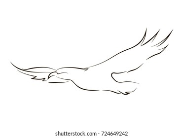Flying black line eagle on white background. Hand drawing vector graphic bird. Animal illustration.