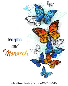 Flying, bright, blue morpho and orange monarch butterflies on white background.