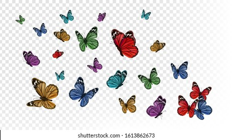 Flying butterflies. Colorful butterfly isolated on transparent background. Spring and summer insects vector illustration