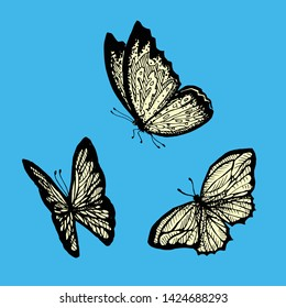 Flying butterflies on a blue background. Morpho. Monarch butterfly. Design with butterflies. hand draw print