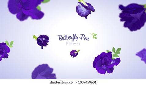 Flying butterfly pea flowers and leaf on blue background template. Vector set of element for advertising, packaging design of natural herb products.