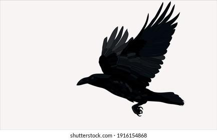 Flying crow. Raven. Vector image.