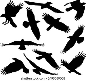 flying crow silhouettes - vector illustration