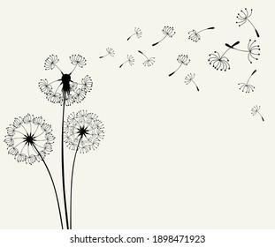 Flying dandelion seeds, vector illustration
