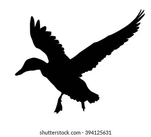Flying duck silhouette.  Vector EPS 8