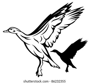 flying duck vector illustration - black and white outline and silhouette