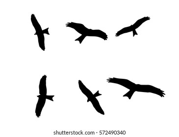 Flying eagle silhouettes, vector illustration