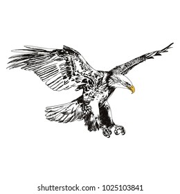 Flying eagle vector illustration black and white. American symbol for freedom ready to use.