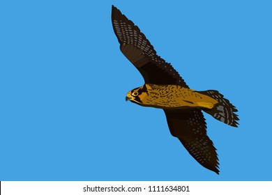 Flying falcon. Vector image. Blue sky background. Peregrine Falcon.