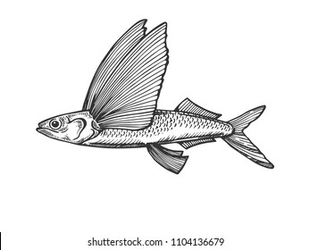 Flying fish animal engraving vector illustration. Scratch board style imitation. Black and white hand drawn image.