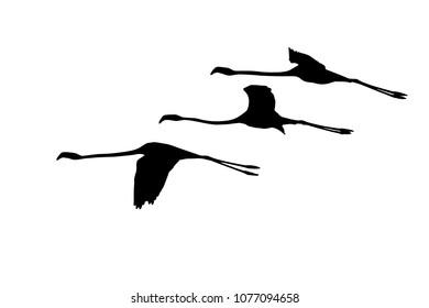 Flying flamingos. Vector birds. White background.