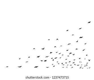 Flying flock of birds on white background