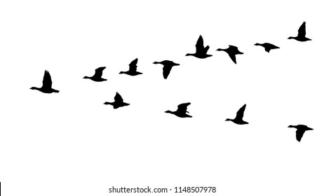 Flying flock of geese in the autumn, triange of birds in the sky (12 different silhouettes of birds)