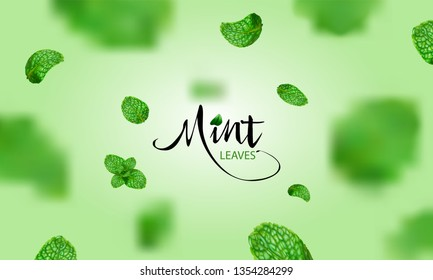 Flying green mint leaves on green background template. Vector set of element for advertising, packaging design of tea products.
