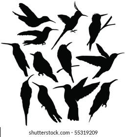 flying hummingbird silhouettes - vector
