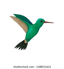 Flying hummingbird, tiny colibri with bright turquoise plumage vector Illustration on a white background