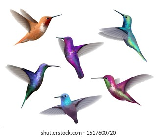 Flying hummingbirds. Little colored birds exotic jungle colored little hummingbirds vector realistic tropical collection