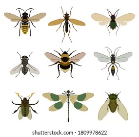 Flying insect set. Isolated realistic fly pest, dragonfly, bumblebee, wasp animals with wings icons. Flying insect bug collection. Nature vector illustration