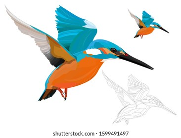 Flying Kingfisher. Colorful bird. Vector image. White background.